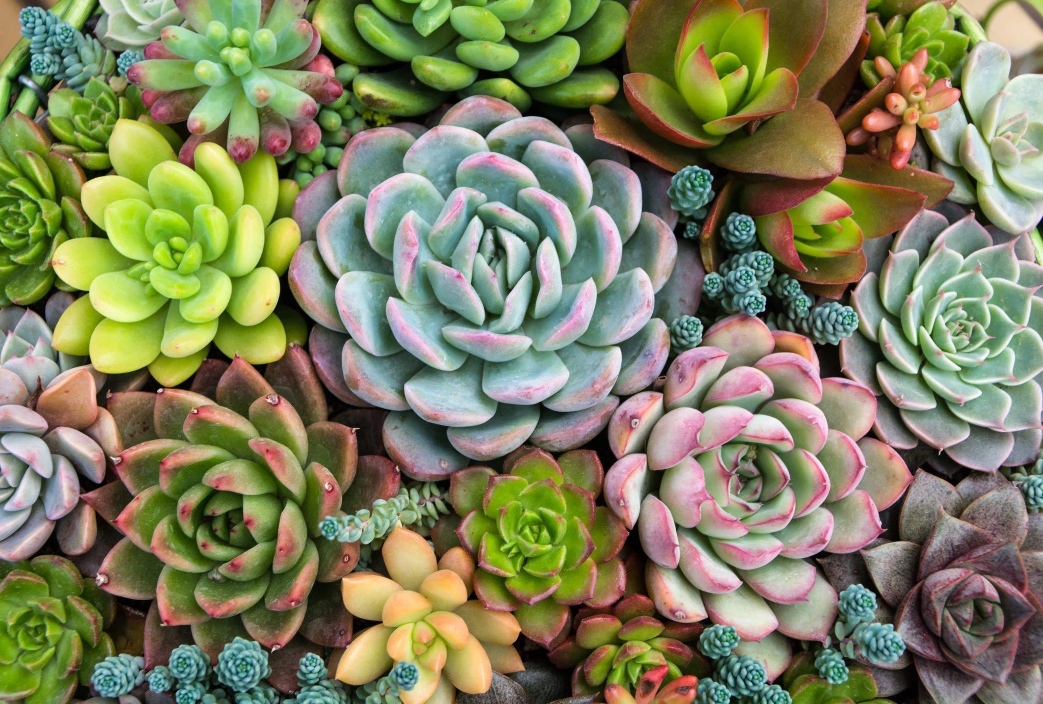 Comment Faire Un Terrarium Plante Grasse création terrarium avec plantes grasses et graviers décoratifs