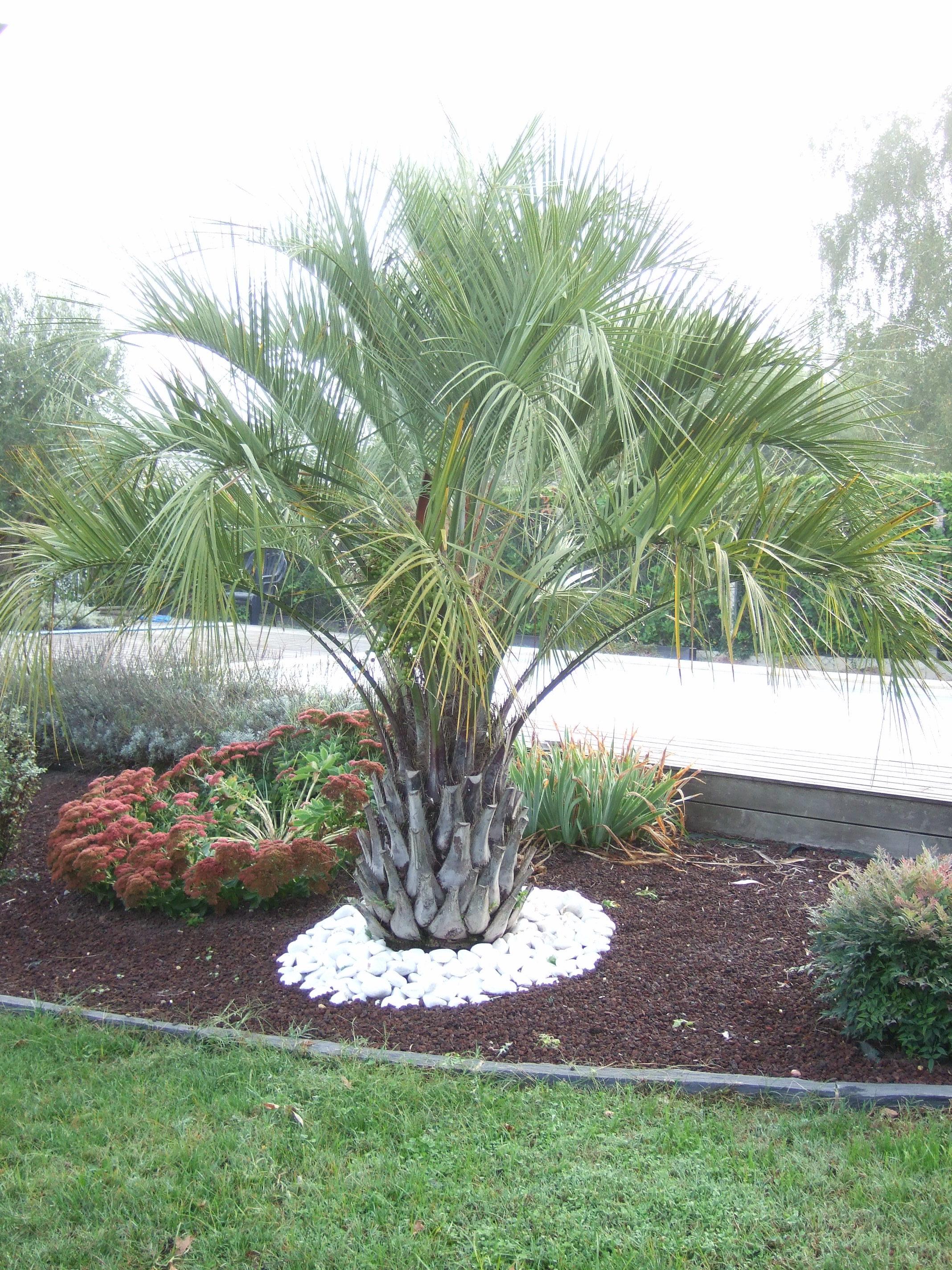 Acheter Gravier Pour Allée quel gravier choisir pour une décoration autour des arbres